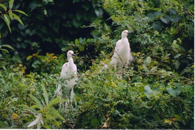 Mandagadde Bird Sanctuary