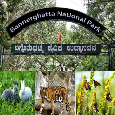 Bannerghatta National Park / ಬನ್ನೇರುಘಟ್ಟ...