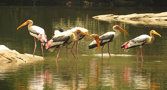 Ranganathittu Bird Sanctuary / ರಂಗನತಿಟ್ಟು...