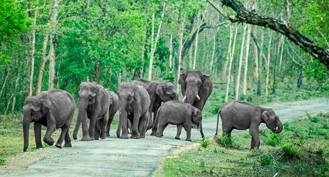 Bandipur National Park / ಬಂಡೀಪುರ ರಾಷ್ಟ್ರೀಯ...