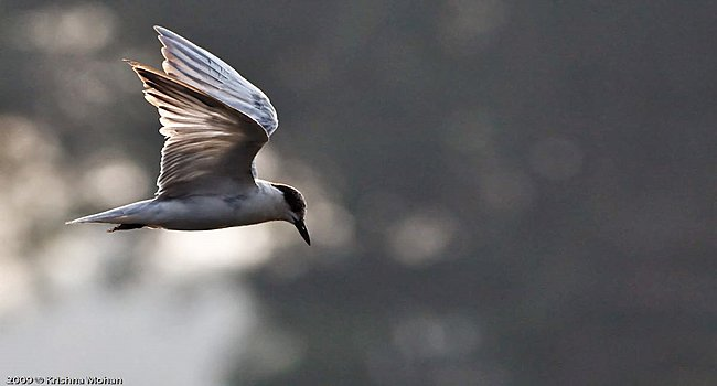 Malyadi Bird Sanctuary /  ಮಲ್ಯಾಡಿ ಪಕ್ಷಿ ಧಾಮ