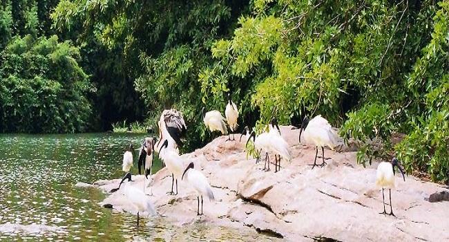 Thattekkad  Bird Sanctuary