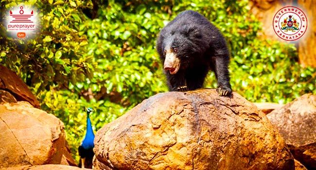 ದರೋಜಿ ಕರಡಿ ಅಭಯಾರಣ್ಯ / Daroji Bear Sanctuary