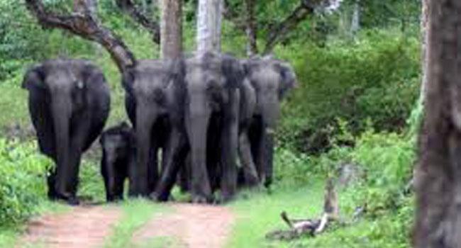 Bandipur National Park / ಬಂಡೀಪುರ ರಾಷ್ಟೀಯ ಉದ್ಯಾನವನ