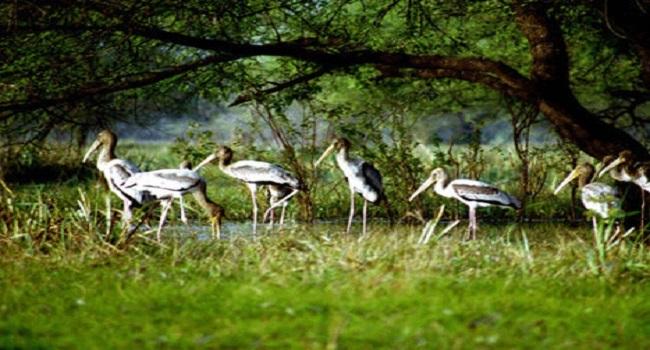 Kumarakom Bird Sanctuary / കുമരകം പക്ഷി...