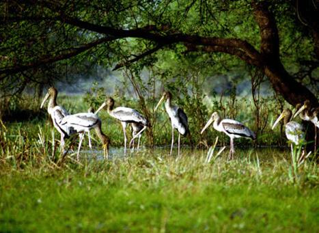 Kumarakom Bird Sanctuary/ കുമരകം...