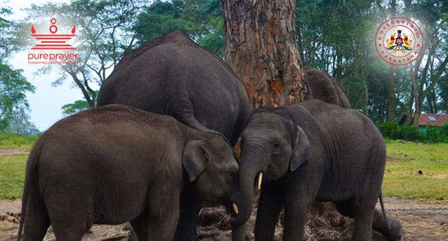 Dubare Elephant Camp / ದುಬಾರೆ ಆನೆ ಶಿಬಿರ